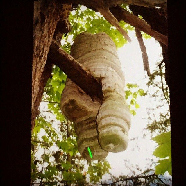 Agarikon Mushroom: Elixer of Life